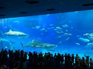 アップルパーク社員旅行_美ら海水族館の巨大水槽