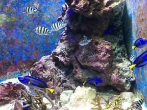 アップルパーク社員旅行_美ら海水族館の熱帯魚
